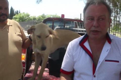 νArgolidaPortal.gr Άργος-Πρόγραμμα περίθαλψης Αδέσποτων σκύλων-αντιδήμαρχος Γκαβούνος