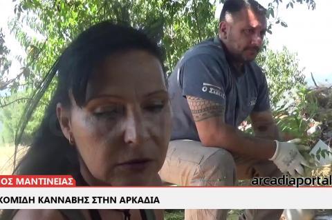 ArcadiaPortal.gr Συγκομιδή κάνναβης στην Αρκαδία