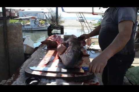 ArgolidaPortal.gr ΑΡΓΟΛΙΔΑ-ΝΕΑ ΚΙΟΣ 2ος καρχαρίας αλιεύτηκε στον Αργολικό κόλπο
