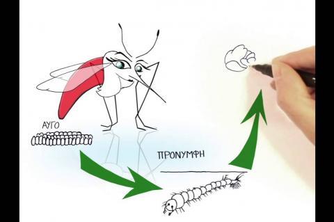 Όσα πρέπει να ξέρουμε για τα κουνούπια | LIFE Conops