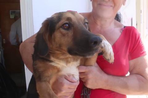 ArgolidaPortal.gr 40 αδέσποτα σκυλάκια στειρώθηκαν στο Άργος