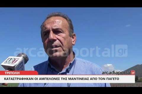 ΑrcadiaPortal.gr Ο παγετός κατάστρεψε την παραγωγή μοσχοφίλερου Μαντινείας για το 2017