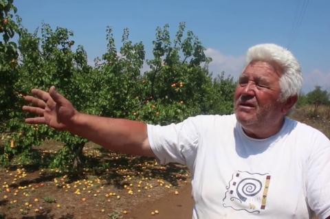 ArgolidaPortal.gr Αργολίδα-Δαλαμανάρα-ζημιές σε καλλιέργειες από την ισχυρή καταιγίδα και το χαλάζι