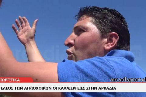 ArcadiaPortal.gr Στο έλεος των αγριόχοιρων οι καλλιέργειες στα Αγιωργίτικα